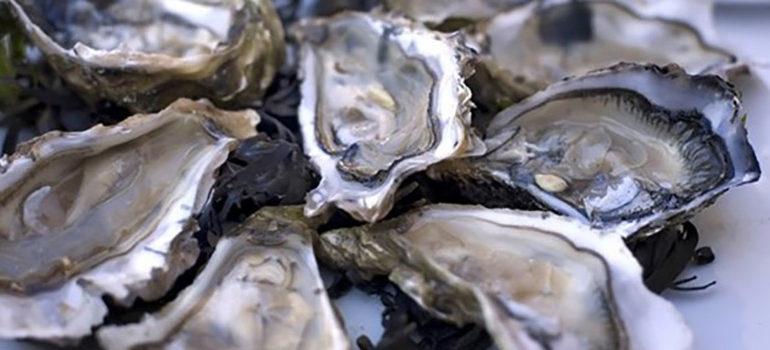 Le retour des huîtres !